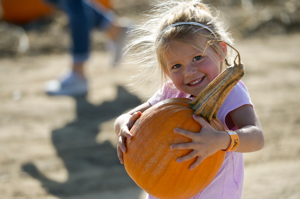 . Braylee Schlueter, 4, of Frederick, tries to carry a pumpkin she picked in the pumpkin patch at Anderson Farms, 6728 County Road 3 1/4, Monday afternoon. Anderson Farms grows 75 varieties of pumpkins with about 300,000 available to be picked. To view more photos visit timescall.com. Lewis Geyer/Staff Photographer Oct. 16, 2017