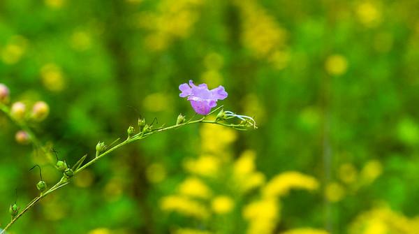 Close UP Wild Flowers_DSCF0400