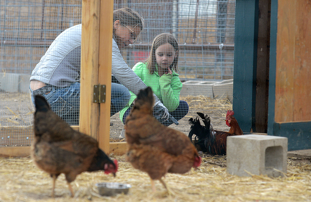 . Luvin Arms Farm Sanctuary volunteer Karen Steenekamp shows Aurora Wilson-Patterson, 7, Rudy the rooster, the animal she will be painting on a mural for the farm with the Artism program in Lafayette on Sunday. Kira Horvath / Staff Photographer / April 10, 2016
