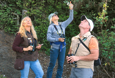 Bureau of Land Management Interpretive Specialist Leisyka Parrott, left, Gayle Martin of Anchorage, Alaska, and BLM Seasonal Park Ranger Russ Namitz look up at birds in the BLM's Ma-le'l Dunes South in Manila on Thursday evening. The three were participating in a BioBlitz in which they used the iNaturalist smartphone app to photograph, identify, and log species of plants and animals that they observed. (Shaun Walker -- The Times-Standard)