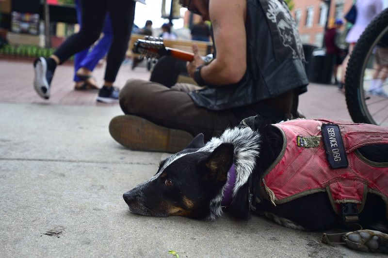 "Zachary Leatherwood, a homeless man, plays music while sitting next to his dog Julio on Pearl Street Mall in downtown Boulder on Friday. Leatherwood says he often receives free food for Julio from passersby or goes dumpster diving to find food for his dog. ""He always eats before me, like every single day,"" he said. <br /> More photos:  <a href=""http://www.dailycamera.com"">http://www.dailycamera.com</a><br /> (Autumn Parry/Staff Photographer)<br /> May 27, 2016"