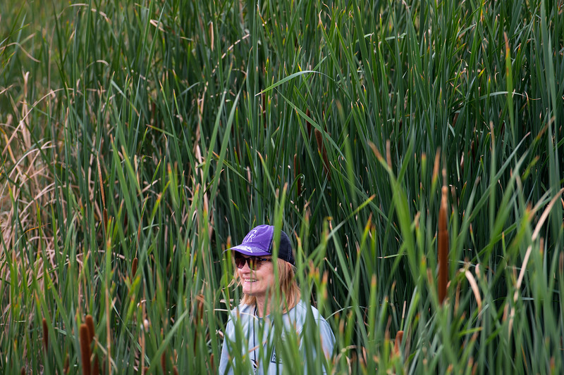 "Kristan Pritz, open space and trails coordinator, searches for trash among the cattails near Le Gault Reservoir during a community clean up, as part of Volunteer Week, in Broomfield on Saturday. <br /> More photos:  <a href=""http://www.dailycamera.com"">http://www.dailycamera.com</a><br /> (Autumn Parry/Staff Photographer)<br /> August 6, 2016"