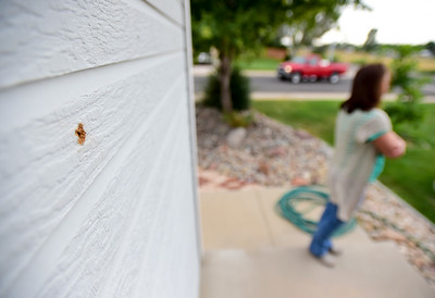 Photos: Bullet Holes Found in Walls of Frederick Home