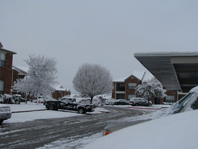 Snow covered trees and buildings at my apartment complex