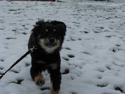 Bailey running to me to play