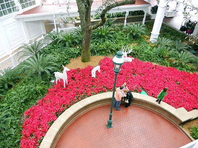 They had beautiful red poinsettias all over the place!