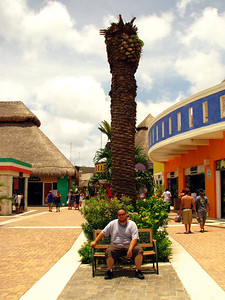 Chuck at a palm tree in the middle of the shopping area in Cozumel.