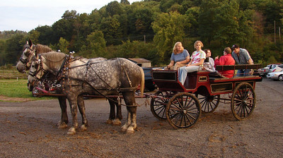 This team of Percheron draft horses brought guests from a distant parking area.
