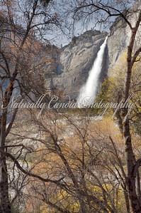 Yosemite Falls. Yosemite National Park, CA