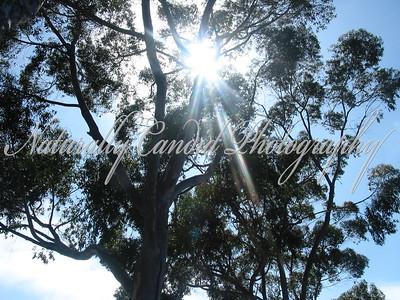 Sun Star in Trees.  Dana Point, CA