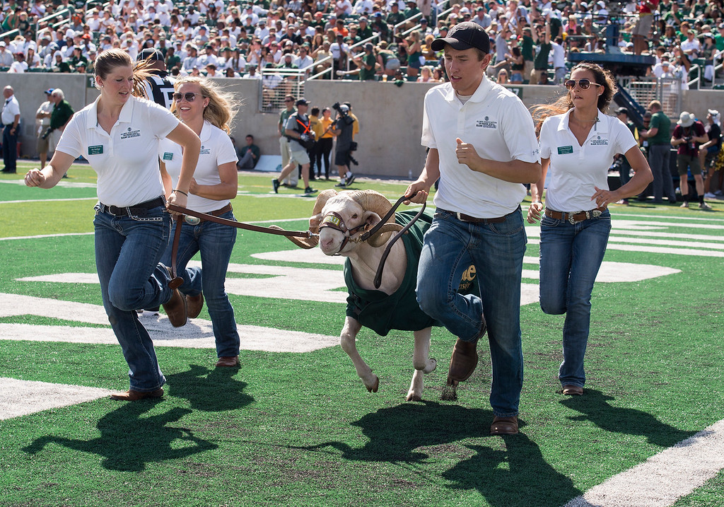 . CAM the RAM and his handlers race across the end zone after a CSU score against Oregon State Saturday afternoon August 26, 2017 during the Ram\'s inaugural football game at the new on-campus stadium in Fort Collins. The Rams won the game 58-27. (Michael Brian/For the Reporter-Herald)