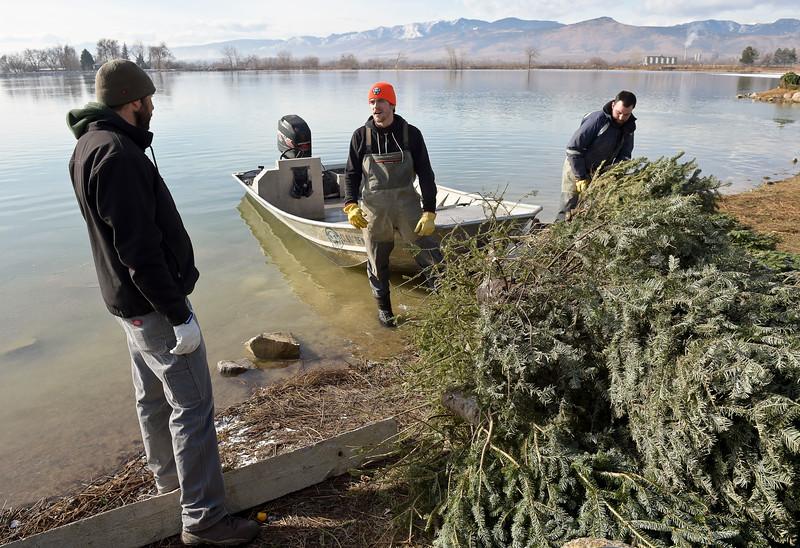 CHRISTMAS TREES IN LAKE