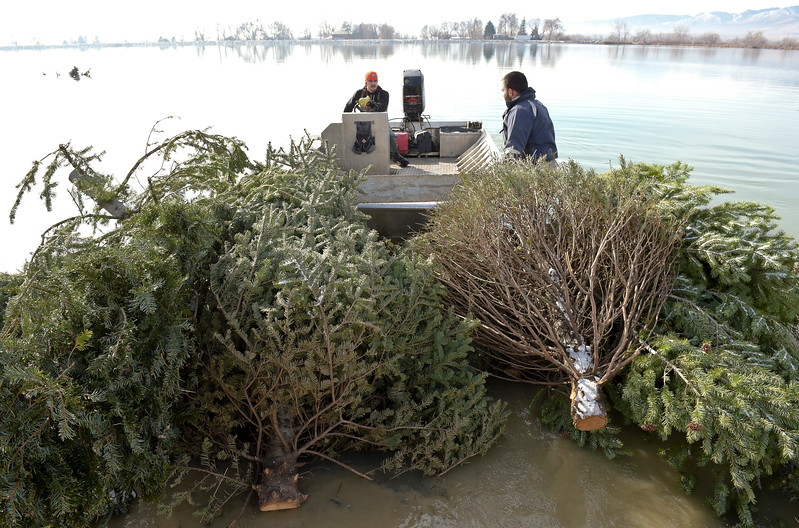 CHRISTMAS TREES IN LAKE