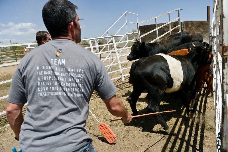 COLD SPRINGS FIRE LIVESTOCK