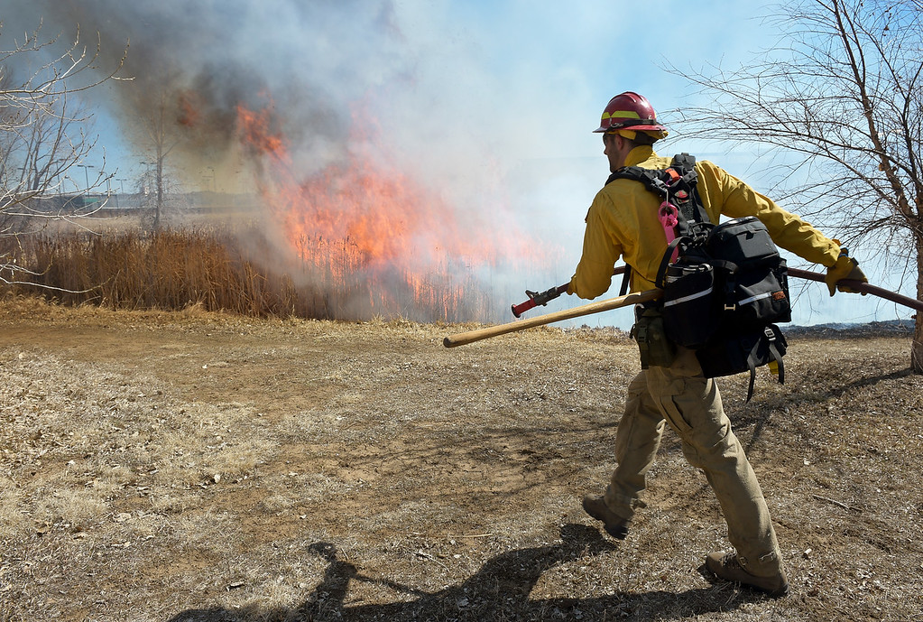 . LONGMONT, CO - MARCH 20: Firefighter Matthew Horton drags a water line to the edge of a controlled burn in the pond in front of the Rec Center at the Quail Campus March 20, 2019. The cattails were burned by Longmont fire fighters and natural resources/parks and open space employees to increase the holding capacity of the pond. Its water is used to irrigate the landscaping in the area. The cattails were not dry enough last fall when a previous controlled burn was attempted, according to information from the City of Longmont\'s web site. To view more photos visit timescall.com. (Photo by Lewis Geyer/Staff Photographer)