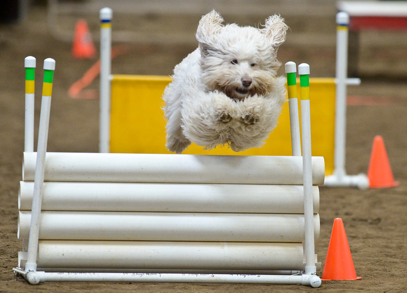 UKC AGILITY TRIALS