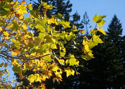 Photos: Fall Foliage at Humboldt State University