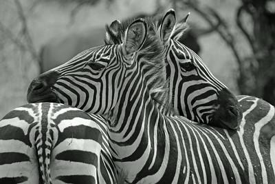 Tarangire National Park - friends