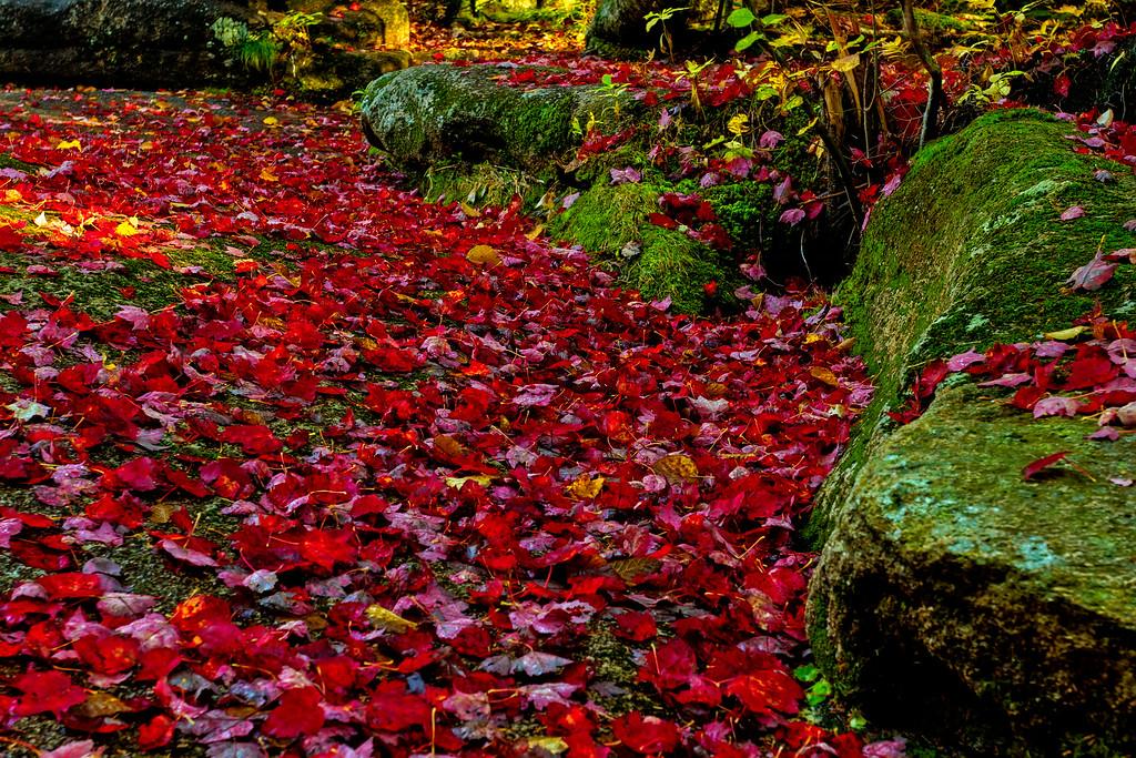 Autumns Blanket