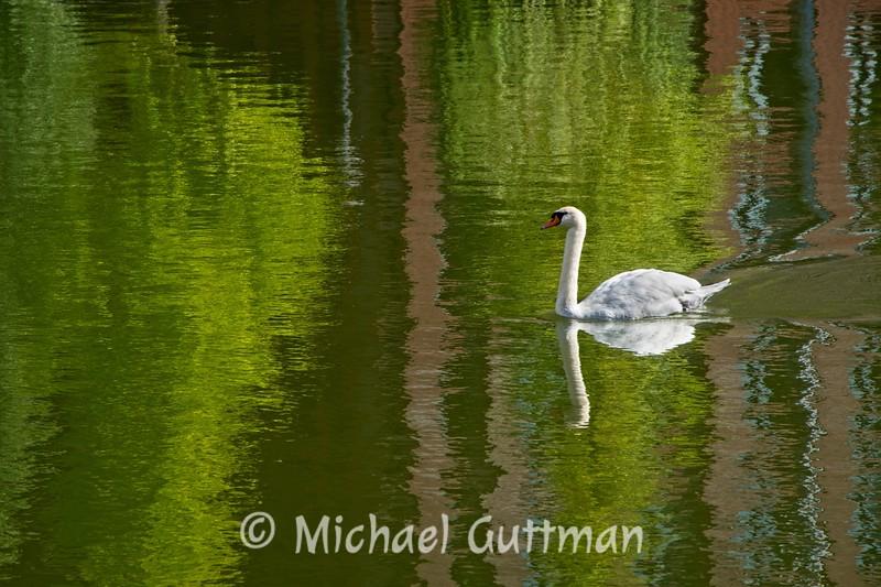 White Swan - Tokyo, Japan