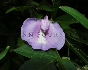 FLOV02_purpleflwr03