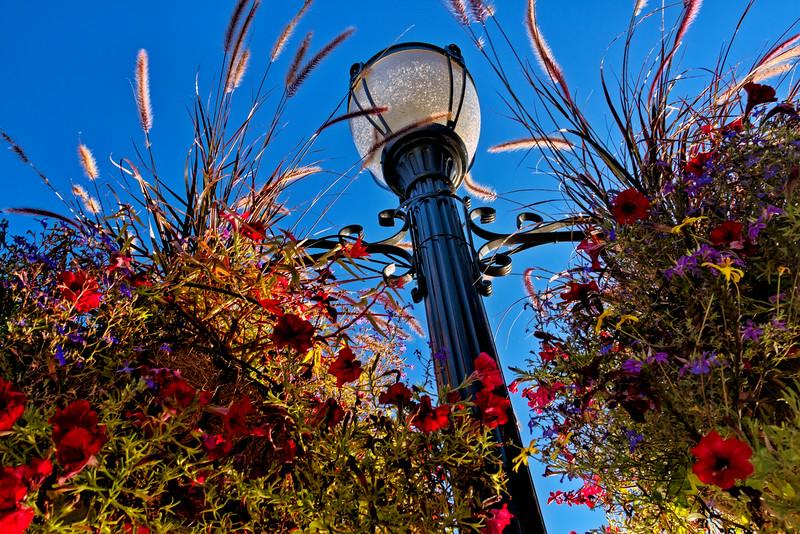Flower Light Post