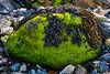 Algae Rock