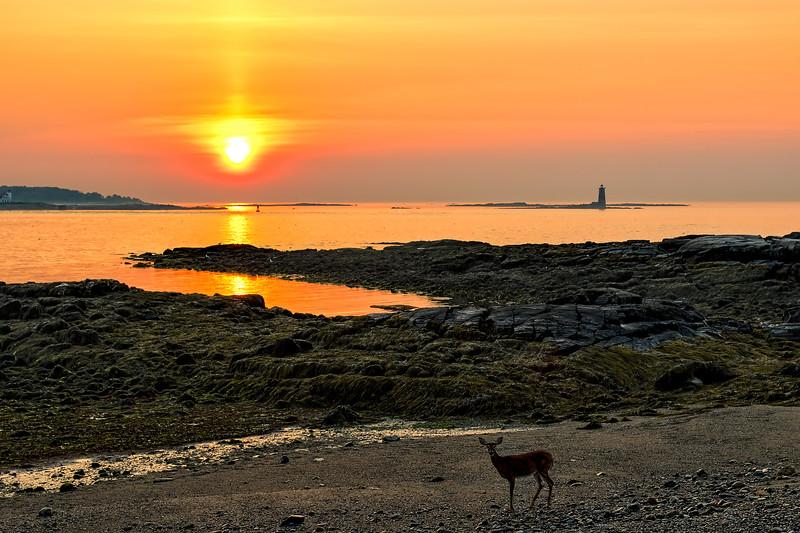Summer Sunrise