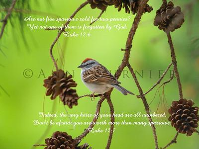 Luke 12:6, 7 (NIV)