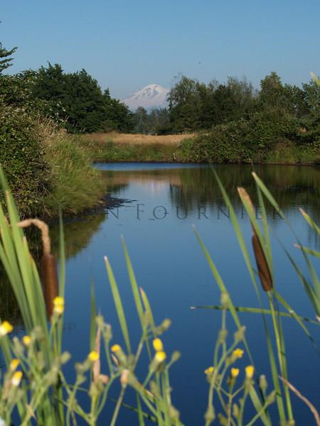 WA01_P7200806 - Mt. Baker, Washington in background.