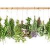 Fresh herbs. Basil, rosemary, thyme, mint, dill, sage, garlic