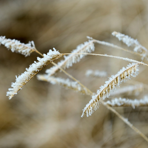frost_LG20811