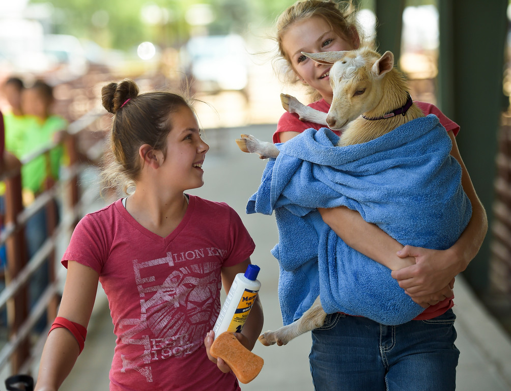 . Toffee, a four-month-old Nigerian Dwarf goat, gets a lift after being given a bath by Emma Robinson, 11, left, and Sadie Connolly, 13, at the Boulder County Fair Monday. To view more photos visit timescall.com. Lewis Geyer/Staff Photographer July 31, 2017
