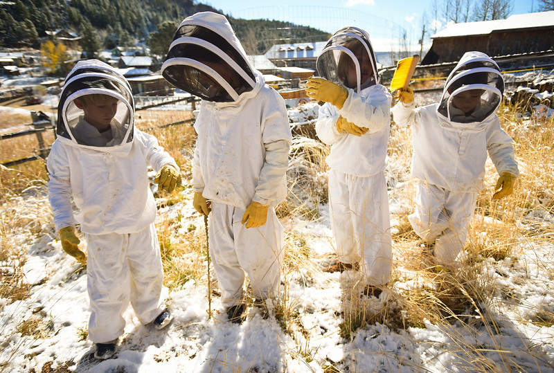 BEES AT GOLD HILL SCHOOL
