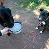 """Kath Allen, co-founder of Hike Doggie, gives water to Henry and LuLu during a hike at  Chautauqua Park on Friday.<br /> More photos:  <a href=""""http://www.dailycamera.com"""">http://www.dailycamera.com</a><br /> (Autumn Parry/Staff Photographer)<br /> June 17, 2016"""