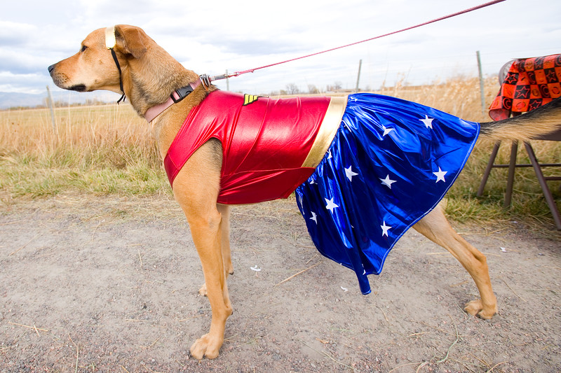 """A dog named Stella dressed as a superwoman for the """"Howl-o-ween"""" event held by the City of Boulder's Open Space and Mountain Parks Department at Cherryvale Trailhead in Boulder on Sunday. <br /> More photos:  <a href=""""http://www.dailycamera.com"""">http://www.dailycamera.com</a><br /> (Autumn Parry/Staff Photographer)<br /> October 30, 2016"""