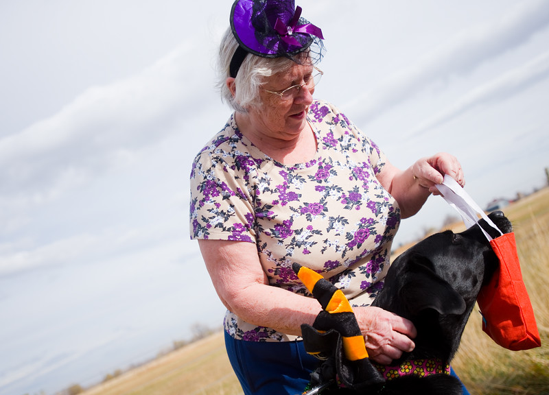 """A black lab named Moki tries to steal dog treats out of a bag from Carol Dillon during the """"Howl-o-ween"""" event held by the City of Boulder's Open Space and Mountain Parks Department at Cherryvale Trailhead in Boulder on Sunday. <br /> More photos:  <a href=""""http://www.dailycamera.com"""">http://www.dailycamera.com</a><br /> (Autumn Parry/Staff Photographer)<br /> October 30, 2016"""