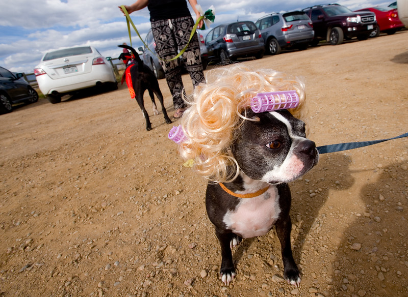 """Sugaree wears a wig for the  """"Howl-o-ween"""" event held by the City of Boulder's Open Space and Mountain Parks Department at Cherryvale Trailhead in Boulder on Sunday. <br /> More photos:  <a href=""""http://www.dailycamera.com"""">http://www.dailycamera.com</a><br /> (Autumn Parry/Staff Photographer)<br /> October 30, 2016"""