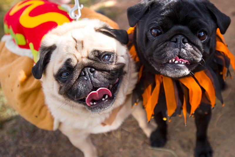 """Mozart (left) and Hamburglar  dressed for the """"Howl-o-ween"""" event held by the City of Boulder's Open Space and Mountain Parks Department at Cherryvale Trailhead in Boulder on Sunday. <br /> More photos:  <a href=""""http://www.dailycamera.com"""">http://www.dailycamera.com</a><br /> (Autumn Parry/Staff Photographer)<br /> October 30, 2016"""