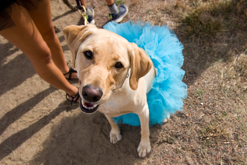 "Nala, dressed as a ballerina, attends the ""Howl-o-ween"" event held by the City of Boulder's Open Space and Mountain Parks Department at Cherryvale Trailhead in Boulder on Sunday. <br /> More photos:  <a href=""http://www.dailycamera.com"">http://www.dailycamera.com</a><br /> (Autumn Parry/Staff Photographer)<br /> October 30, 2016"