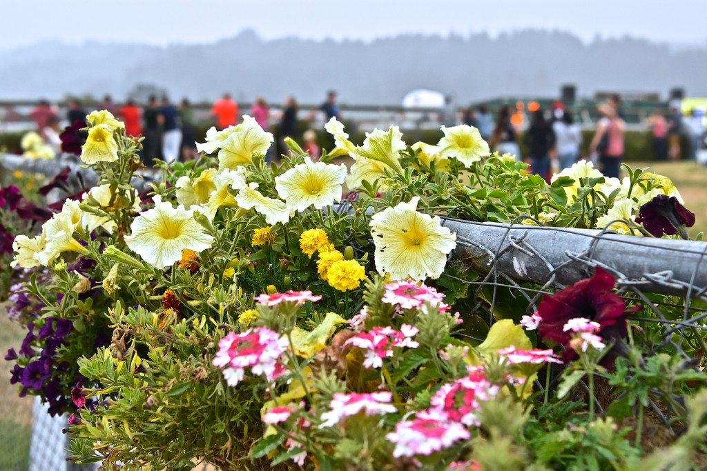 . Violas and carnations frame bettors waiting for horse race to begin.  José Quezada�For Times-Standard