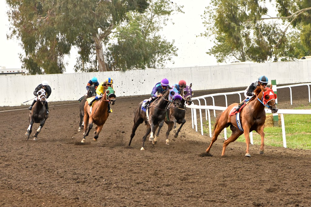. Horses round the turn for the fifth race Monday afternoon.  José Quezada�For Times-Standard