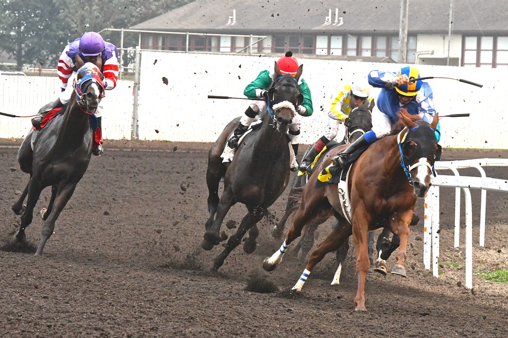 . Flying turf and thundering hooves head for the straightaway finish at the Ferndale Racetrack.  José Quezada�For Times-Standard