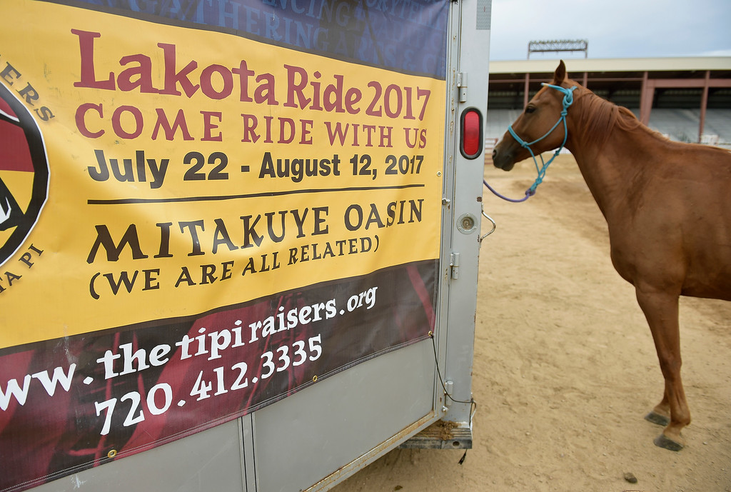 . A horse waits to be saddled for the next leg of the Lakota Ride 2017 at the Boulder County Fairgrounds Tuesday. The 400-mile ride, which started in Golden Saturday, raises money and awareness for families living on the Pine Ridge Reservation in South Dakota. It is expected to end at the reservation in mid August. To view more photos and a video visit timescall.com. Lewis Geyer/Staff Photographer July 25, 2017