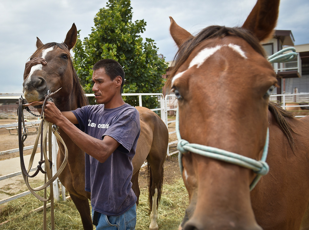 . Waylon Belt, 38, prepares his horses for the next leg of the Lakota Ride 2017 at the Boulder County Fairgrounds Tuesday. Belt, a resident of the Pine Ridge Reservation, said he lives in a 25-foot trailer with his wife and three children and no electricity. The 400-mile ride, which started in Golden Saturday, raises money and awareness for families living on the reservation in South Dakota and is expected to end in mid August. To view more photos and a video visit timescall.com. Lewis Geyer/Staff Photographer July 25, 2017