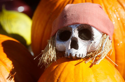 A decorated fake skull sits atop a pumpkin at the market. (Shaun Walker -- The Times-Standard)