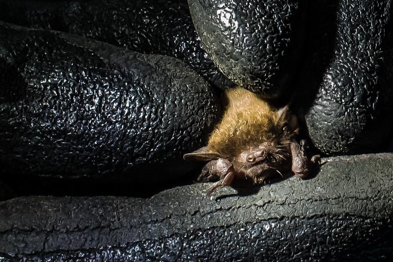 Bat, Vwaza Marsh Wildlife Reserve