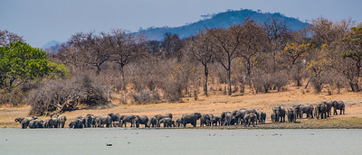 Elephants at the lake, Vwaza Marsh Wildlife Reserve