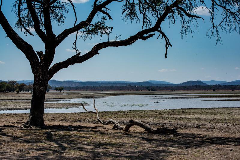 Lakeside driftwood, Vwaza Marsh Wildlife Reserve
