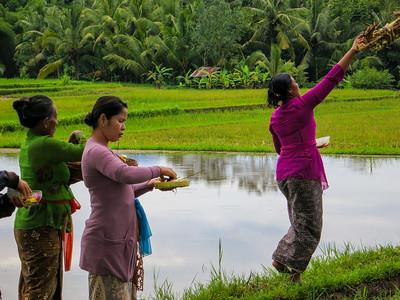 Rice paddy blessing, Ubud, Bali
